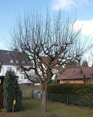 Baum-vorher