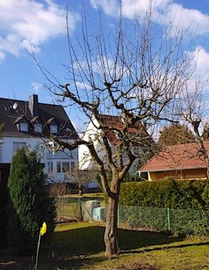 Baum-nachher